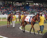 Carrera de caballos en Barbados en Garrison Savannah foto de archivo libre de regalías