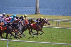 Carrera de caballos en césped Imagen de archivo libre de regalías