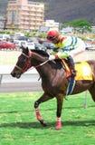 Carrera de caballos en Isla Mauricio Imagen de archivo libre de regalías