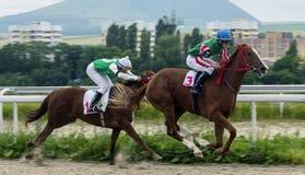 Carrera de caballos para el premio del Letni en Pyatigorsk Imagen de archivo libre de regalías