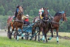 Carrera de caballos. Tres caballos en harness Fotos de archivo libres de regalías