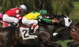 Carrera del cuello y de caballos del cuello fotografía de archivo libre de regalías