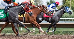 Carreras de caballos pasadas en Arizona hasta caída imagen de archivo