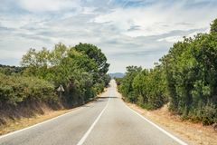 Carretera, árboles y arbustos rectos de asfalto en el lado del camino al pueblo de Oliena, Cerdeña, Italia imagen de archivo libre de regalías