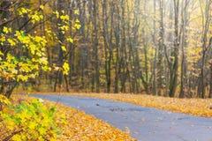 Carretera asfalto en el medio del bosque durante el autumn_ de oro imagenes de archivo