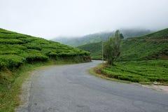 Carretera con curvas con la plantación y la niebla de té Fotos de archivo libres de regalías