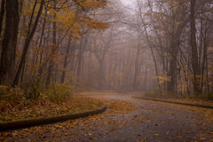 Carretera con curvas en bosque Imagen de archivo