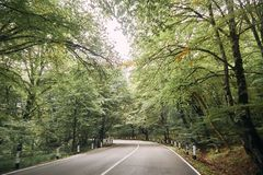 Carretera con curvas en el bosque fotografía de archivo libre de regalías