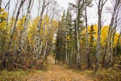 Carretera con curvas entre los árboles coloreados caída alta Foto de archivo