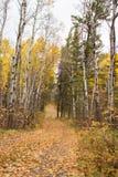 Carretera con curvas entre los árboles coloreados caída alta Fotos de archivo libres de regalías