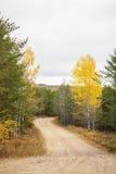 Carretera con curvas entre los árboles spruce Foto de archivo libre de regalías