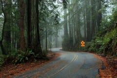Carretera con curvas a través de las secoyas Imágenes de archivo libres de regalías