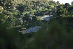 Carretera con curvas a través de un bosque por la mañana fotografía de archivo libre de regalías