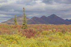 Carretera de Alaska Denali en otoño fotografía de archivo
