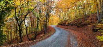 Carretera de asfalto colorida Fotografía de archivo