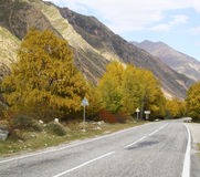 Carretera de asfalto curvada vacía, árboles con el cielo azul amarilleado de las hojas Foto de archivo