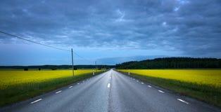 Carretera de asfalto en campo de la violación Imágenes de archivo libres de regalías