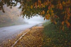 Carretera de asfalto en el medio del parque por la mañana del otoño Tr fotos de archivo libres de regalías
