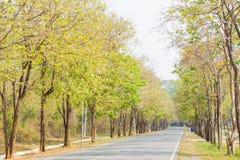 Carretera de asfalto en la selva fotografía de archivo libre de regalías