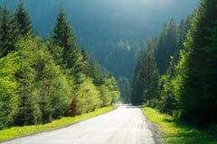 Carretera de asfalto entre las montañas del bosque en árboles de pino en luz del sol Imágenes de archivo libres de regalías