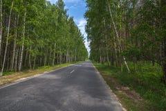 Carretera de asfalto entre los árboles Imagen de archivo libre de regalías