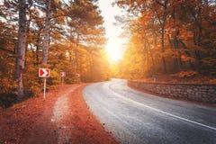Carretera de asfalto hermosa en bosque anaranjado en la salida del sol colorida en otoño Montañas crimeas Fotografía de archivo
