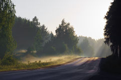 Carretera de asfalto por la mañana brumosa temprana del bosque Fotografía de archivo