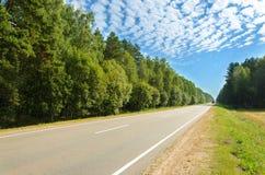 Carretera de asfalto a través del bosque de hojas caducas Foto de archivo libre de regalías