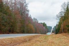 Carretera de asfalto a través del bosque de hojas caducas Fotografía de archivo libre de regalías