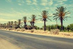 Carretera de asfalto vacía en el medio del oasis Foto de archivo libre de regalías
