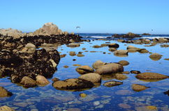 Carretera de la Costa del Pacífico, California Imagen de archivo libre de regalías