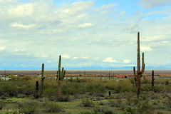 Carretera del desierto de Arizona fotografía de archivo