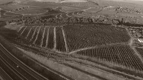 Carretera entre filas del viñedo