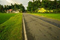 Carretera entre plantaciones de arroz, Road between rice plantations royalty free stock images