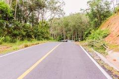 Carretera nacional abajo de la colina, bosque del árbol de goma a continuación Imagen de archivo libre de regalías