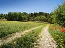 Carretera nacional con el campo y los árboles de trigo Imagenes de archivo