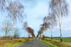 Carretera nacional con los árboles de abedul desnudos en ambos lados, campos anchos Fotos de archivo