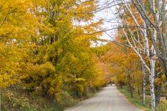 Carretera nacional con los árboles de oro en caída Foto de archivo