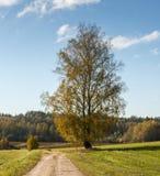 Carretera nacional con un árbol de abedul solo en otoño Fotos de archivo