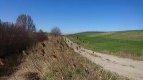 Carretera nacional de la pizca del campo del otoño Foto de archivo libre de regalías