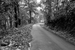 Carretera nacional en el bosque Imagen de archivo