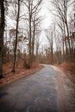 Carretera nacional en el bosque en día brumoso Imágenes de archivo libres de regalías