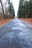 Carretera nacional en el bosque en día brumoso Imagen de archivo libre de regalías