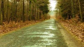 Carretera nacional en el bosque en día brumoso Fotos de archivo libres de regalías