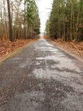 Carretera nacional en el bosque en día brumoso Fotografía de archivo