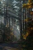Carretera nacional en el bosque que los rayos del ` s del sol brillan a través de las ramas de árboles imagen de archivo