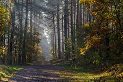 Carretera nacional en el bosque que los rayos del ` s del sol brillan a trav?s de las ramas de ?rboles imagenes de archivo