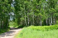 Carretera nacional en la madera de abedul, verano Foto de archivo