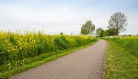 Carretera nacional en la primavera entre el un montón de naturaleza del bloomin. imágenes de archivo libres de regalías
