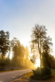 Carretera nacional en mañana soleada de niebla Imágenes de archivo libres de regalías